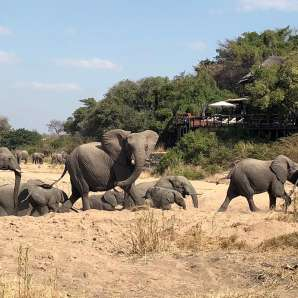 Azura_Benguerra/Jock_Safari_Lodge_Premium/elephants_in_the_riverbed_jsf