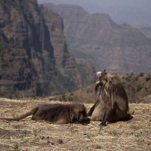 Etiopia_Ras_Dashen/SIMIEN-2